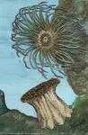 thumb_anemone